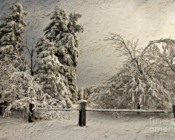 White Christmas Poster featuring the photograph Heavy Laden Blizzard by Lois Bryan
