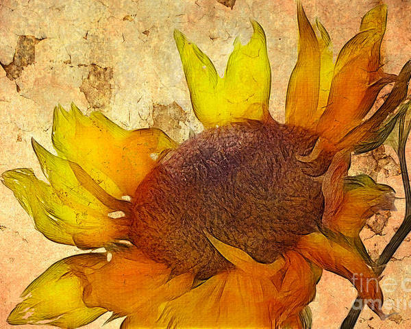 Sunflower Painting Poster featuring the digital art Helianthus by John Edwards