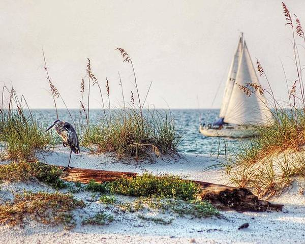 Alabama Poster featuring the photograph Heron And Sailboat Larger Sizes by Michael Thomas