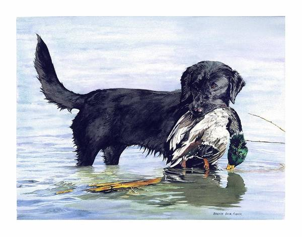 Black Retriever Dog Retrieving A Mallard. Poster featuring the painting His First Catch by Brenda Beck Fisher