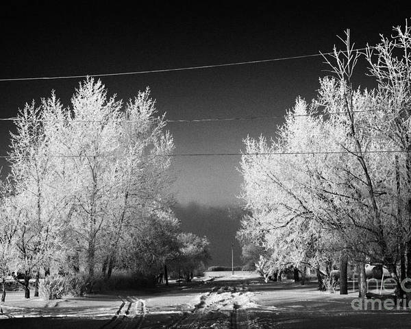 Hoar Poster featuring the photograph hoar frost covered trees on street in small rural village of Forget Saskatchewan Canada by Joe Fox