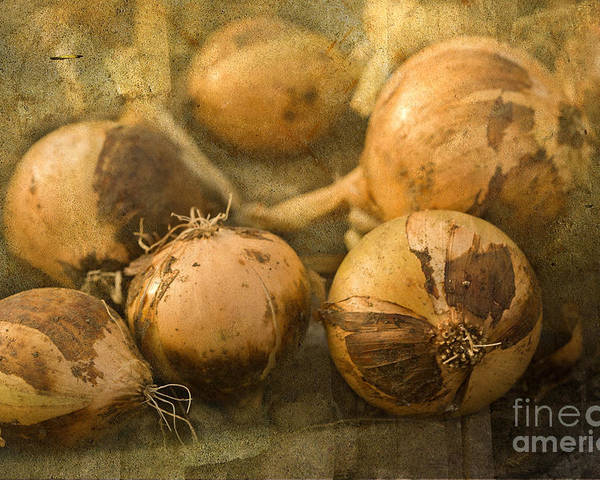 Onions Poster featuring the photograph Home Grown by Liz Alderdice