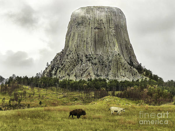 Devils Tower National Monument Poster featuring the photograph Home On The Range At Devils Tower by Teresa A and Preston S Cole Photography