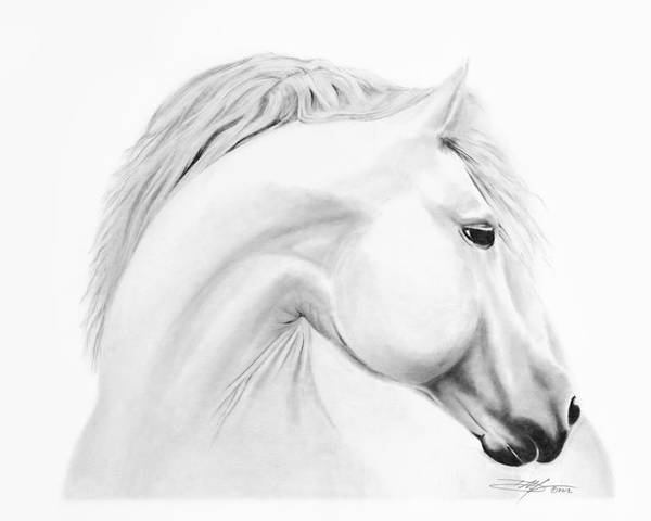 Horse Poster featuring the drawing Horse by Don Medina