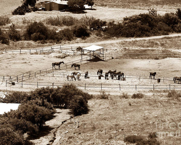 Horse Farm At Kourion Poster featuring the photograph Horse Farm At Kourion by John Rizzuto