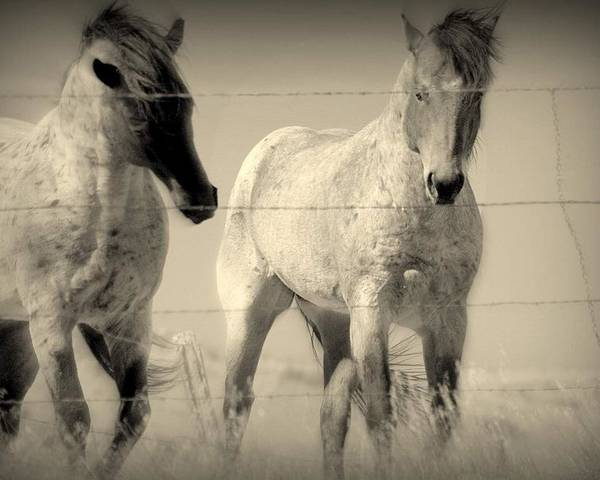 Horses.mysteries Poster featuring the photograph Horse Mysteries.. by Al Swasey