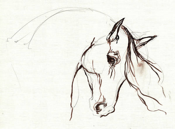 Horse Poster featuring the painting Horse Sketch by Angel Ciesniarska