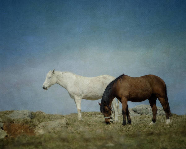 Horse Poster featuring the photograph Horses On A Hill by Kathy Jennings