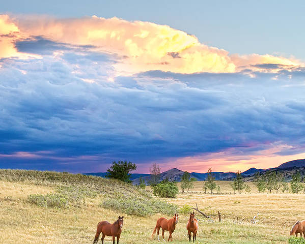 Storm Poster featuring the photograph Horses On The Storm 2 by James BO Insogna