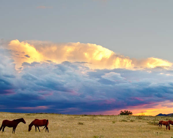 Horses Poster featuring the photograph Horses On The Storm by James BO Insogna