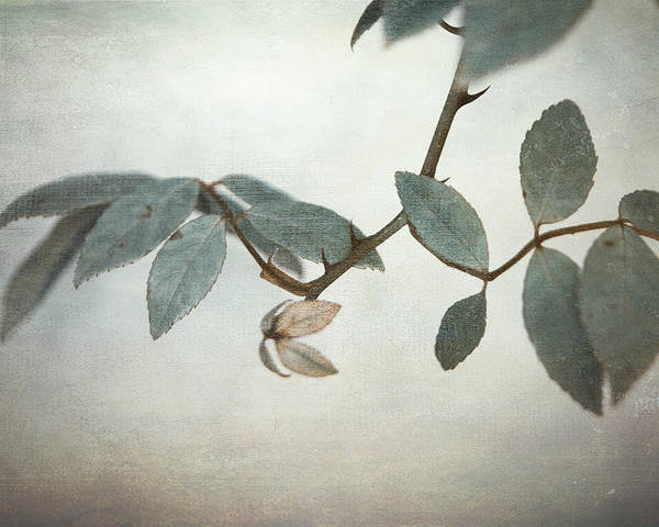 Leaves Poster featuring the photograph How Delicate This Balance by Laurie Search