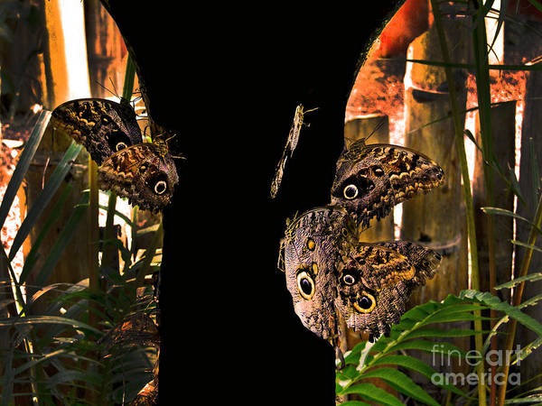 Huge Poster featuring the photograph Huge Butterflies In Mindo by Al Bourassa