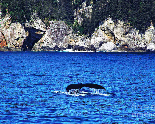 Humpback Whale Poster featuring the photograph Humpback Whale Alaska by Thomas R Fletcher