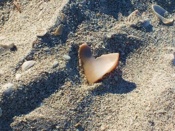 Seashell Poster featuring the photograph I Heart The Beach by Anna Villarreal Garbis