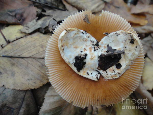 Heart Poster featuring the photograph I Love Mushrooms by Ara Wilnas