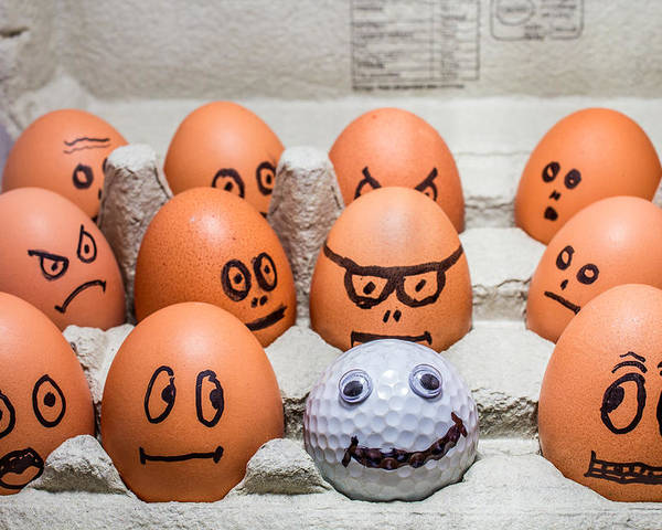 Eggs Poster featuring the photograph Impostor. by Gary Gillette