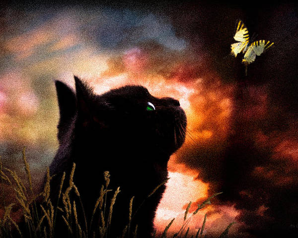 Sky Poster featuring the photograph In A Cats Eye All Things Belong To Cats. by Bob Orsillo