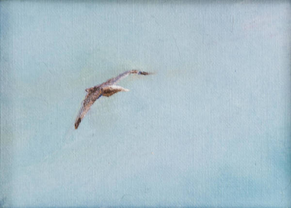 Bird Peaceful Sky Poster featuring the painting In Flight by Paul Rowe