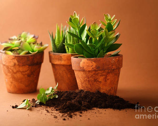 Indoor Plant Poster featuring the photograph Indoor Plant by Boon Mee