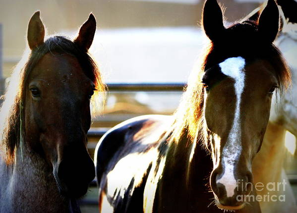 Horse Poster featuring the photograph Innocent Eyes by Bill Keiran