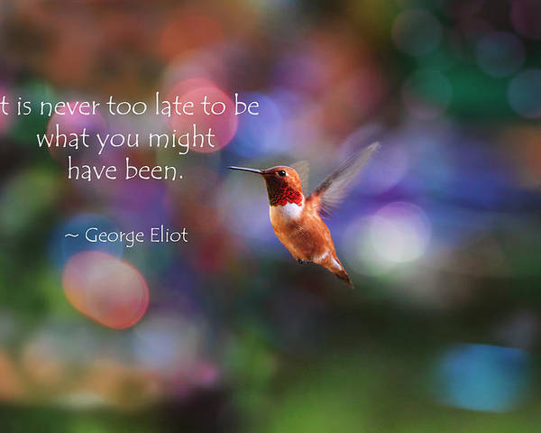 Inspirational Poster featuring the photograph Inspirational Hummingbird by Peggy Collins