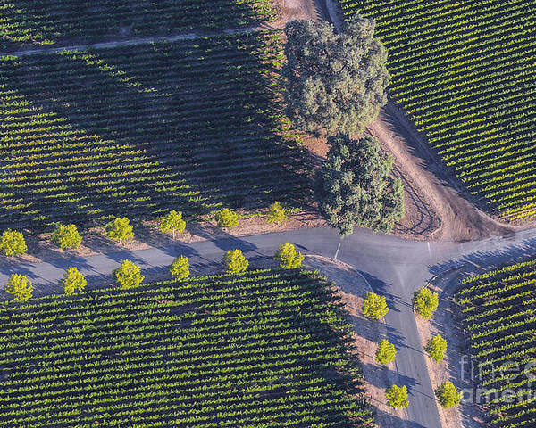 Napa Valley California Winery Wineries Grape Vine Vines Tree Trees Road Roads Street Streets Row Rows Vineyard Vineyards Landscape Landscapes Poster featuring the photograph Intersection by Bob Phillips