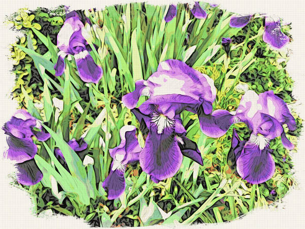 Irises Poster featuring the photograph Irises In The Garden by Alice Gipson