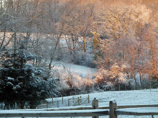 Snow Poster featuring the photograph It's A Beautiful Morning by Rabiah Seminole