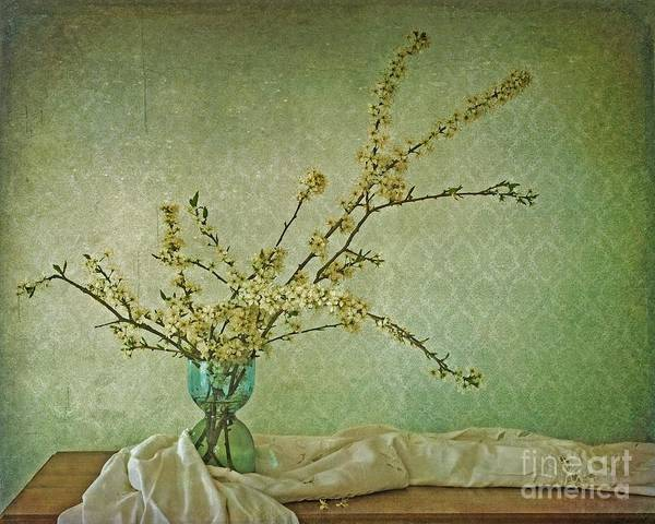 Blossoms Poster featuring the photograph Ivory And Turquoise by Priska Wettstein