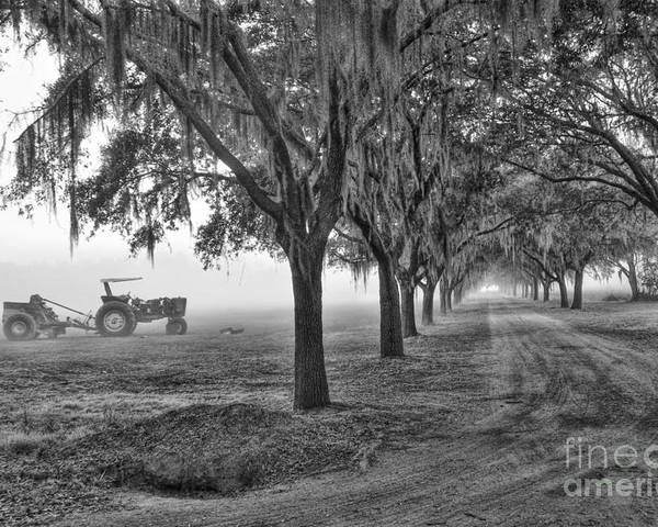 Low Poster featuring the photograph John Deer Tractor And The Avenue Of Oaks by Scott Hansen