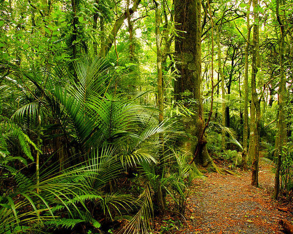Forest Poster featuring the photograph Jungle Scene by Les Cunliffe