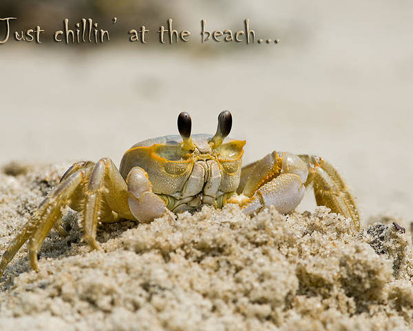 Greeting Card Poster featuring the photograph Just Chillin On The Beach by Jeff Abrahamson