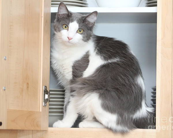 Cat Poster featuring the photograph Kitchen Cubbard Cat by Michelle Powell