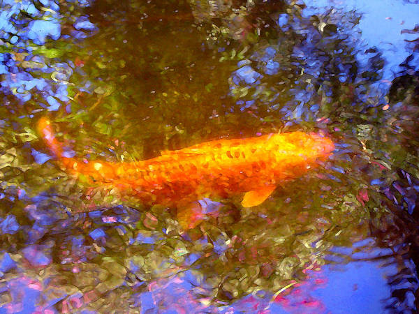 Animal Poster featuring the painting Koi Fish 2 by Amy Vangsgard