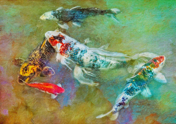 Fish Poster featuring the photograph Koi Kollection by Robert Jensen