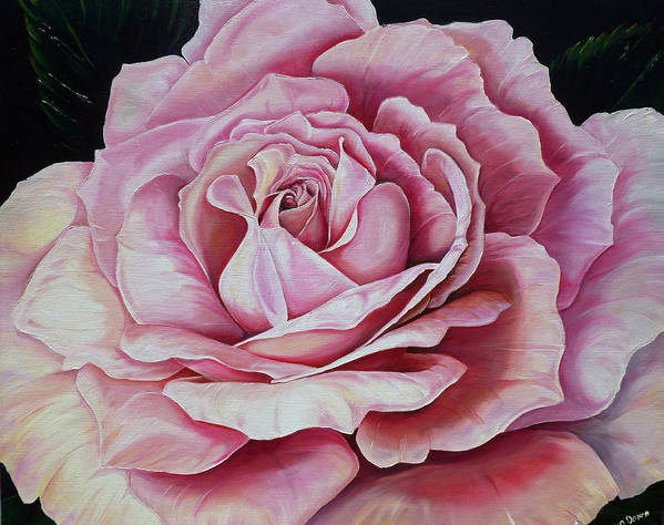 Rose Painting Pink Rose Painting  Floral Painting Flower Painting Botanical Painting Greeting Card Painting Poster featuring the painting La Bella Rosa by Karin Dawn Kelshall- Best