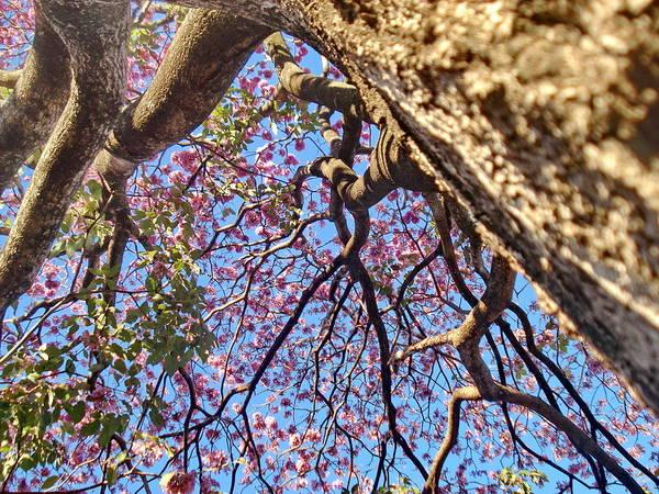 Tree Poster featuring the photograph La Vida Es Bella by Beto Machado