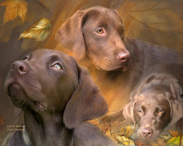 Labrador Retriever Poster featuring the mixed media Lab In Autumn by Carol Cavalaris