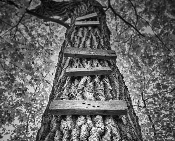 Tree Poster featuring the photograph Ladder To The Treehouse by Scott Norris