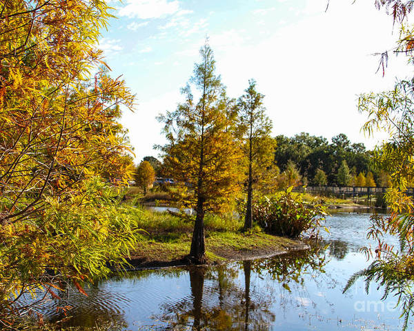 Lake Howard Poster featuring the photograph Lake Howard - Fall Color In The Park by RJ Powell Studios
