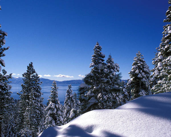 Trees Poster featuring the photograph Lake Tahoe In Winter by Kathy Yates