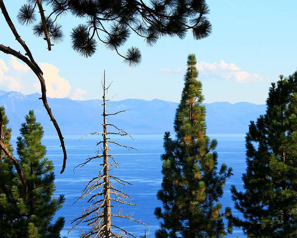 Lake Poster featuring the photograph Lake Tahoe Tranquil by Saya Studios