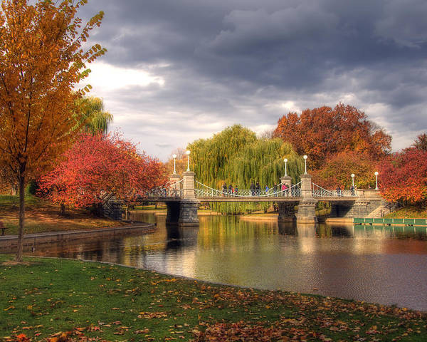 Willow Poster featuring the photograph Late Autumn by Joann Vitali