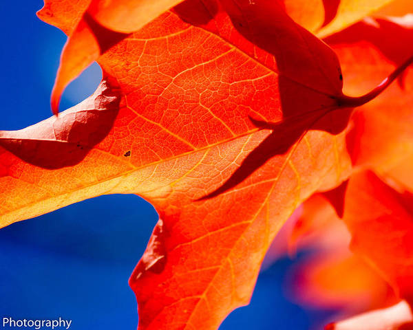 Leaf During Fall Poster featuring the photograph Leaf by Brandon Ostermiller