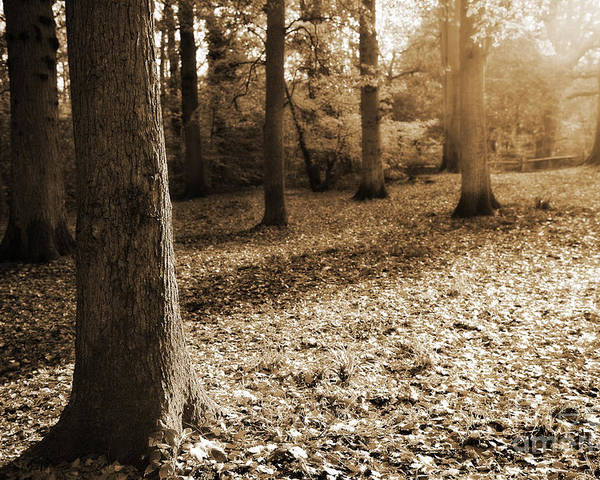 Autumn Poster featuring the photograph Leafy Autumn Woodland In Sepia by Natalie Kinnear