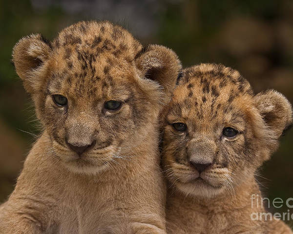 Adorable Poster featuring the photograph Lean On Me by Ashley Vincent