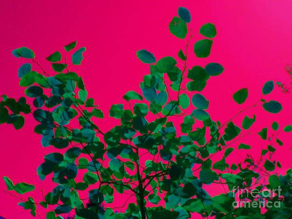 Abstract Poster featuring the photograph Leaves On Pink Back Lit Sky Abstract by Tahlula Arts
