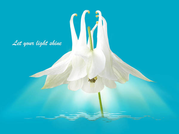 Shining Light Poster featuring the photograph Let Your Light Shine by Gill Billington
