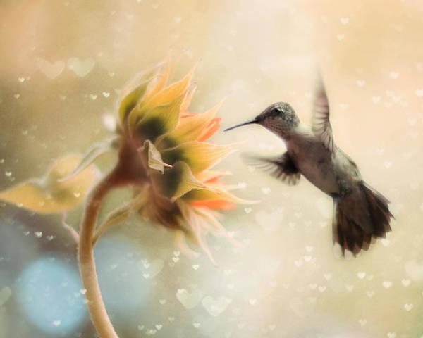 Hummingbird Poster featuring the photograph Like A Moth To A Flame by Amy Tyler