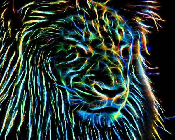 Lion Poster featuring the photograph Lion - 1 by Becca Buecher